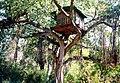 Treehousemarayoor.jpg