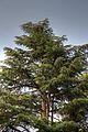Trees at Valpre (18029065036).jpg