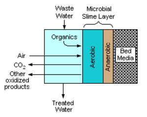 Biofilter - Image 1: A schematic cross-section of the contact face of the bed media in a trickling filter.