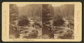 Trouting on the Williamette, Oregon, by Continent Stereoscopic Company.png