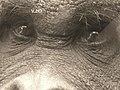 Tuan - sweet eyes. (31776330).jpg