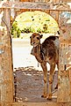 Tunisia-3619 - Let me out!!!! (7847594298).jpg