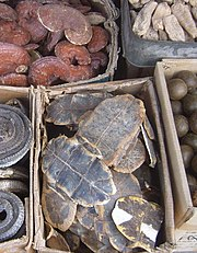 Photograph of a box of turtle plastrons in a market
