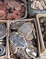 Turtle plastrons as TCM in Xi'an market.jpg