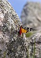 Tuscan Islands - Elba - Le Calanche - Butterfly.jpg