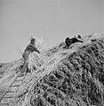 Twee mannen op een hennepberg in Helmond, Bestanddeelnr 254-4263.jpg