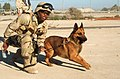 US Navy 030302-N-5362A-009 Military working dog, Camp Patriot, Kuwait.jpg