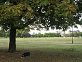 Under the spreading chestnut tree, on Clapham Common - geograph.org.uk - 1514179.jpg