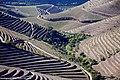 Vale do Rio Douro - Portugal (32783883802).jpg