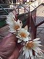 Varanasi temple.jpg