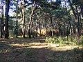 Verde - panoramio - knkillname.jpg