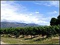 Vineyards in Vasija Secreta, Cafayate.jpg