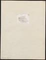 Vipera aspis - kop - 1700-1880 - Print - Iconographia Zoologica - Special Collections University of Amsterdam - UBA01 IZ11700135.tif