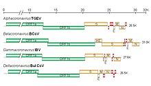 Viry-07-01700-g002.jpg