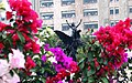 Viviendo entre Flores - panoramio.jpg