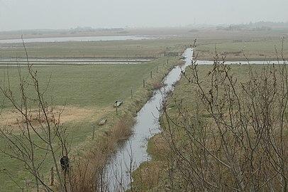 Vogelreservat Wallnau Wasserlauf.jpg