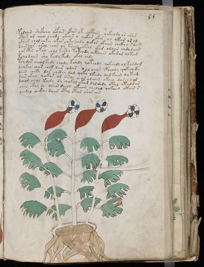 Voynich Manuscript (109).jpg