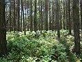 WILCZE ŁUGI wiosna 23 - panoramio.jpg