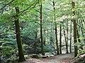 Wald im Küsnachter Tobel.jpg