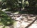 Walking trail, Theodore Roosevelt Island.jpg