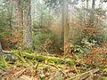 Wanderung im November - panoramio (10).jpg