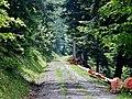 Wanderweg im Nationalpark Schwarzwald - panoramio (1).jpg