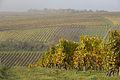 Weininsel 2014 19.jpg