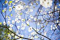 White-blossom-raleigh (Unsplash).jpg