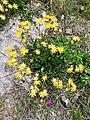 Wild.flowers.jpg