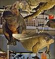Wildlife Panorama, National Museum of Scotland (7008241887).jpg