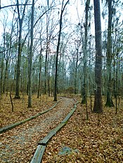 William Bartram Arboretum Ft. Toulouse-Jackson, Alabama.JPG
