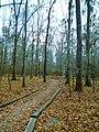 William Bartram Arboretum Ft. Toulouse-Jackson, Alabama.JPG