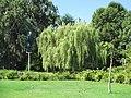 Willow in Zoo-Botanical Garden Nahariya.JPG