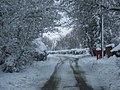 WinterWormshill.jpg