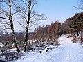 Winter im Teutoburger Wald24.jpg