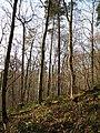 Winter sunshine in Hackfall Wood - geograph.org.uk - 638652.jpg