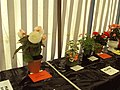 Wirral flower and vegetable show - DSC08215.JPG