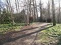 Woodland, Uphall - geograph.org.uk - 1220784.jpg