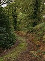 Woodland footpath in Somerley Estate - geograph.org.uk - 268199.jpg