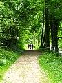 Woodland walk (6044958569).jpg