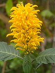Yellow Orange Flower (28889019252).jpg