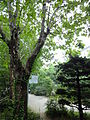 Yeonsei university 2011 (25).JPG