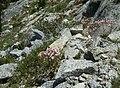 Yet another rock garden - panoramio.jpg