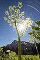 Yosemite (14542949251).jpg
