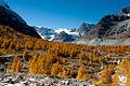 Zermatt (5064662191).jpg