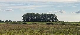 Zicht op groep bomen. Locatie, het Katlijker Schar (Ketliker Skar). 02.jpg