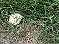 Zlivické louky, čarodějný kruh, houba.jpg