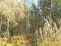 Zolotonis'kyi district, Cherkas'ka oblast, Ukraine - panoramio (69).jpg