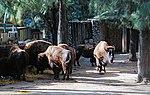 Zoo de Lisboa by Juntas 57.jpg