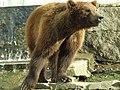 Zoo vigo-010308 034.jpg